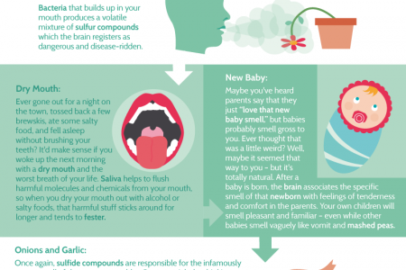 Smell-O-Vision: The Science Behind Good, Bad and Just Plain Nasty Scents Infographic