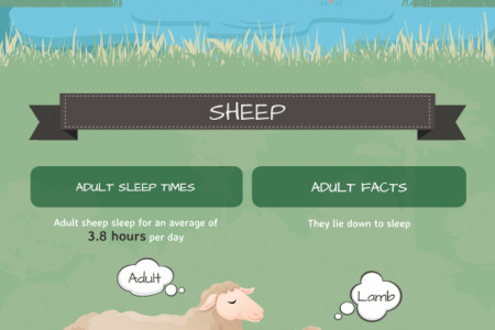 Snoozing in the Animal Kingdom Infographic