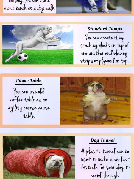 Special Bulldog Training Tips For Better Lifestyle Infographic