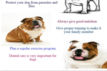 Special Preventative Health Care Tips For Bulldogs Infographic