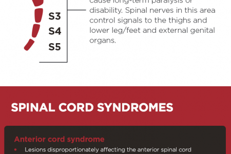 Spinal Cord Injuries  Infographic