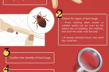 Spot A Bed Bug Infographic