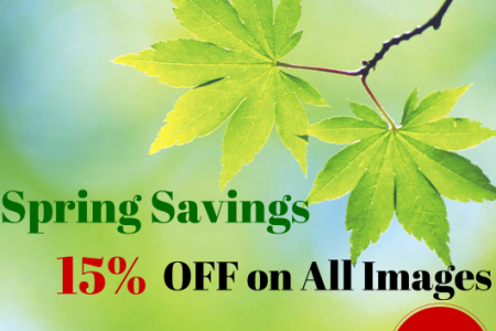 "Spring Savings! Save Up to 15% using Promo Code ""FRESH15"" Infographic"