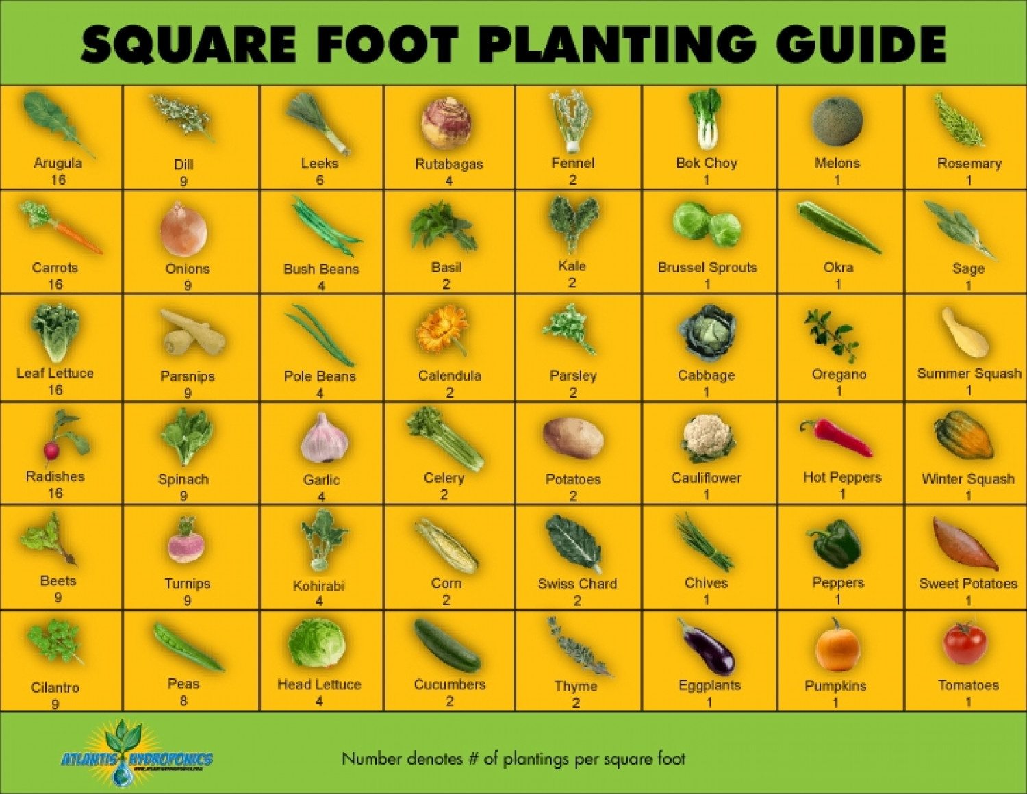 Square foot gardening a garden for everyone - Square meter vegetable garden ...