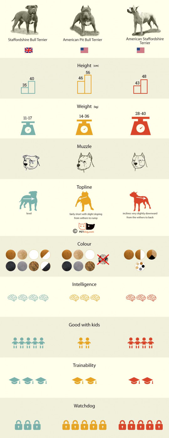 Staff or Pitbull - infographic
