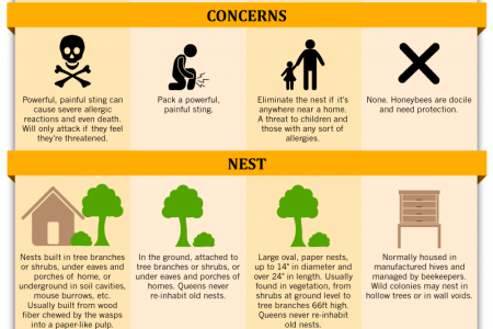 Stinging Insects Pest Control: Know the Difference - Comparing Wasps, Yellow Jackets, Hornets and Honey Bees  Infographic