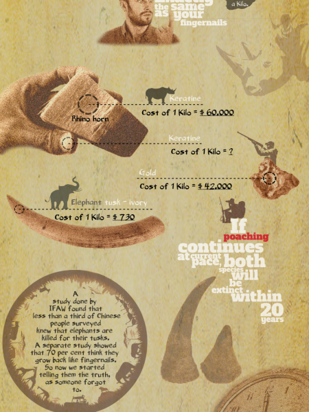 Stop Poaching Infographic