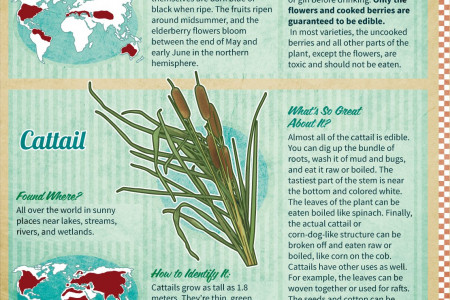 Survivalist's Guide to Eating in the Wilderness Infographic