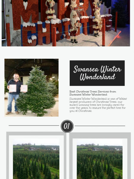 Swansea Winter Wonderland - Beautiful Christmas Trees Infographic