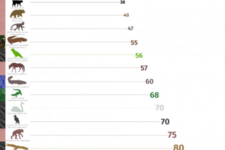 Table of the maximum recorded age of different animal classes and species  Infographic