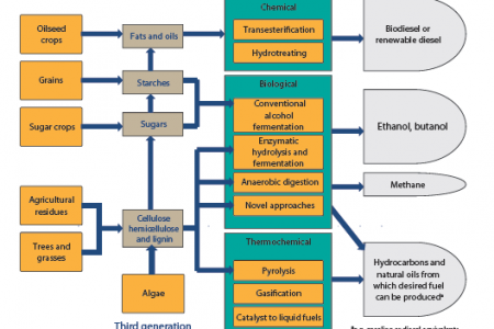 Technology pathways to transform biomass into biofuel. Infographic