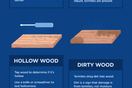 Telltale Signs of Termite Trouble Infographic