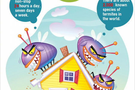 Termites in Home Infographic