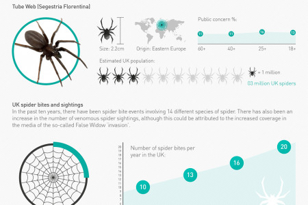 The  Invasion of Spiders in Your Home Infographic
