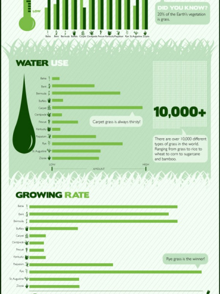 The 12 Most Common US Grasses  Infographic