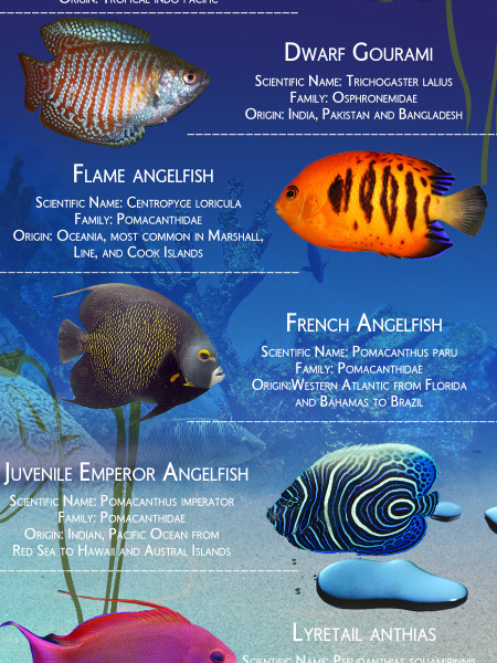 The 15 most beautiful aquarium fish in the world Infographic