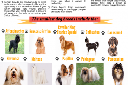 The 15 smallest dog breeds Infographic