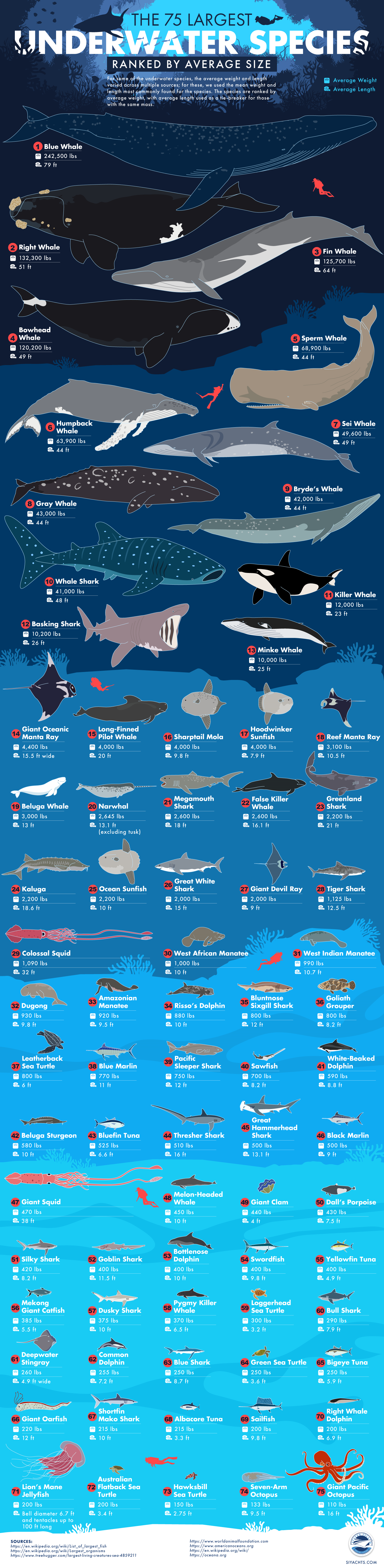 The 75 Largest Underwater Species, Ranked by Average Size Infographic