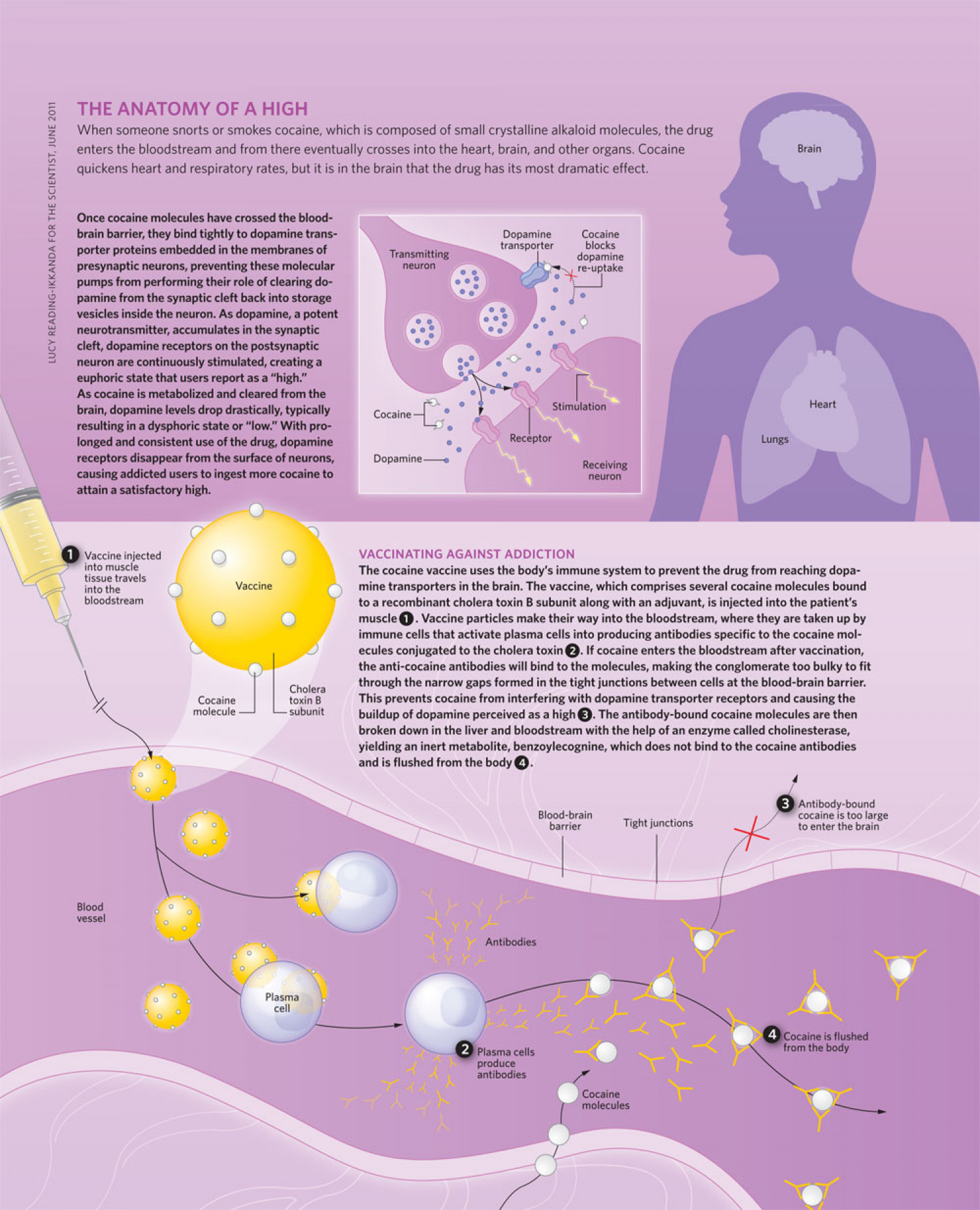 The Anatomy of a High Infographic