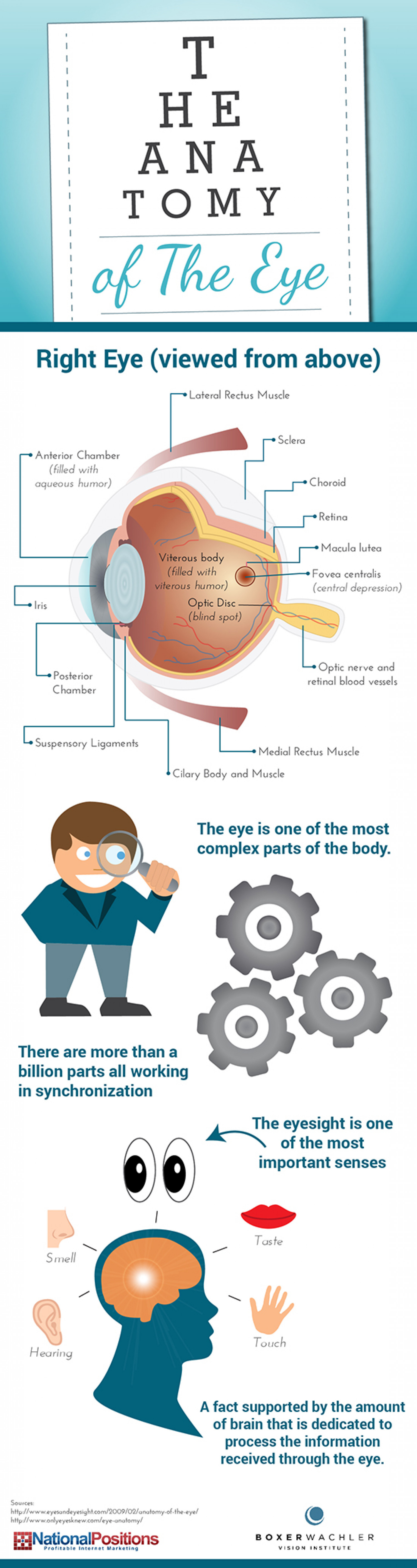 The Anatomy of the Eye Infographic