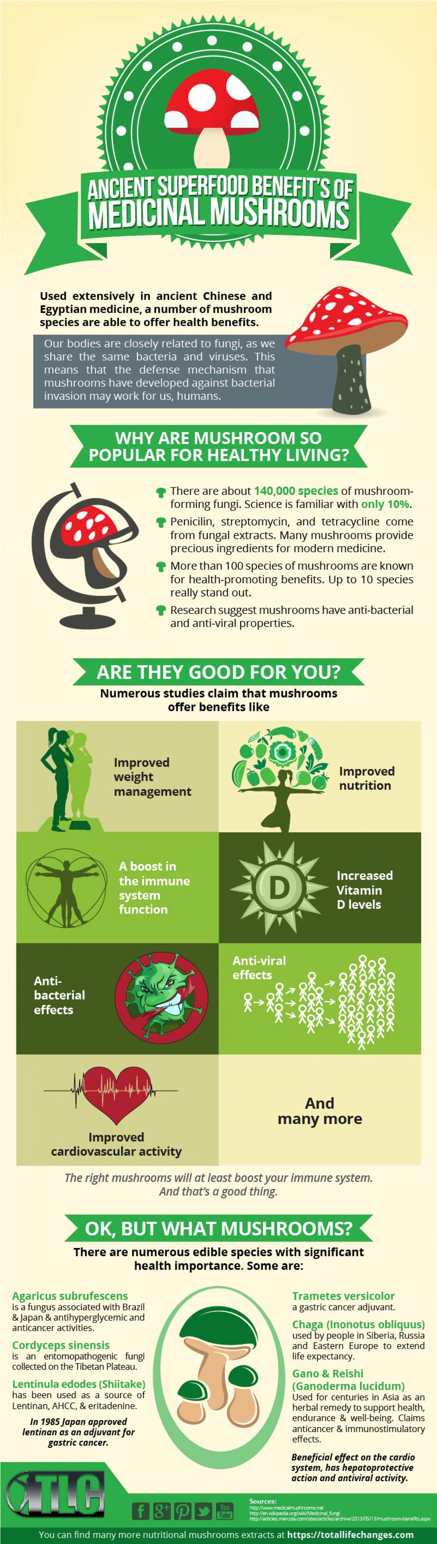 The Ancient Superfood Benefits of Medicinal Mushrooms Infographic