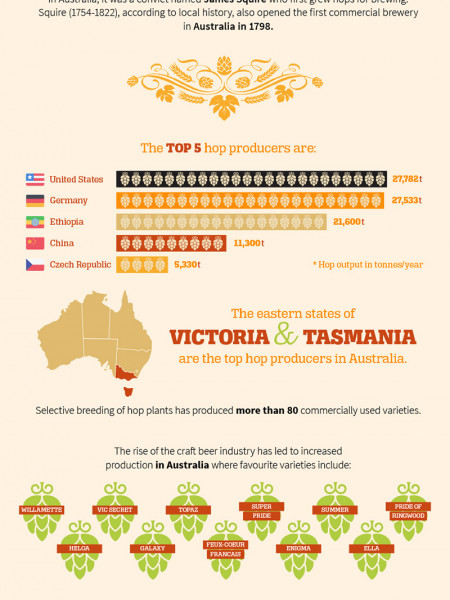 The beautiful marriage of hops and craft beer Infographic