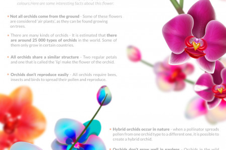 The beauty of the Orchid behind its fickle nature Infographic