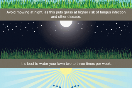 The Best Times For Mowing and Watering Your Lawn Infographic