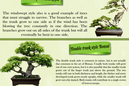 The Bonsai Plant Styles Infographic