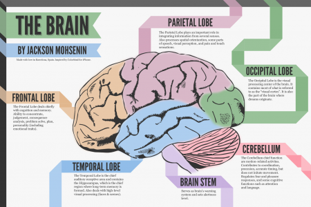 A Look at the Brain Infographic