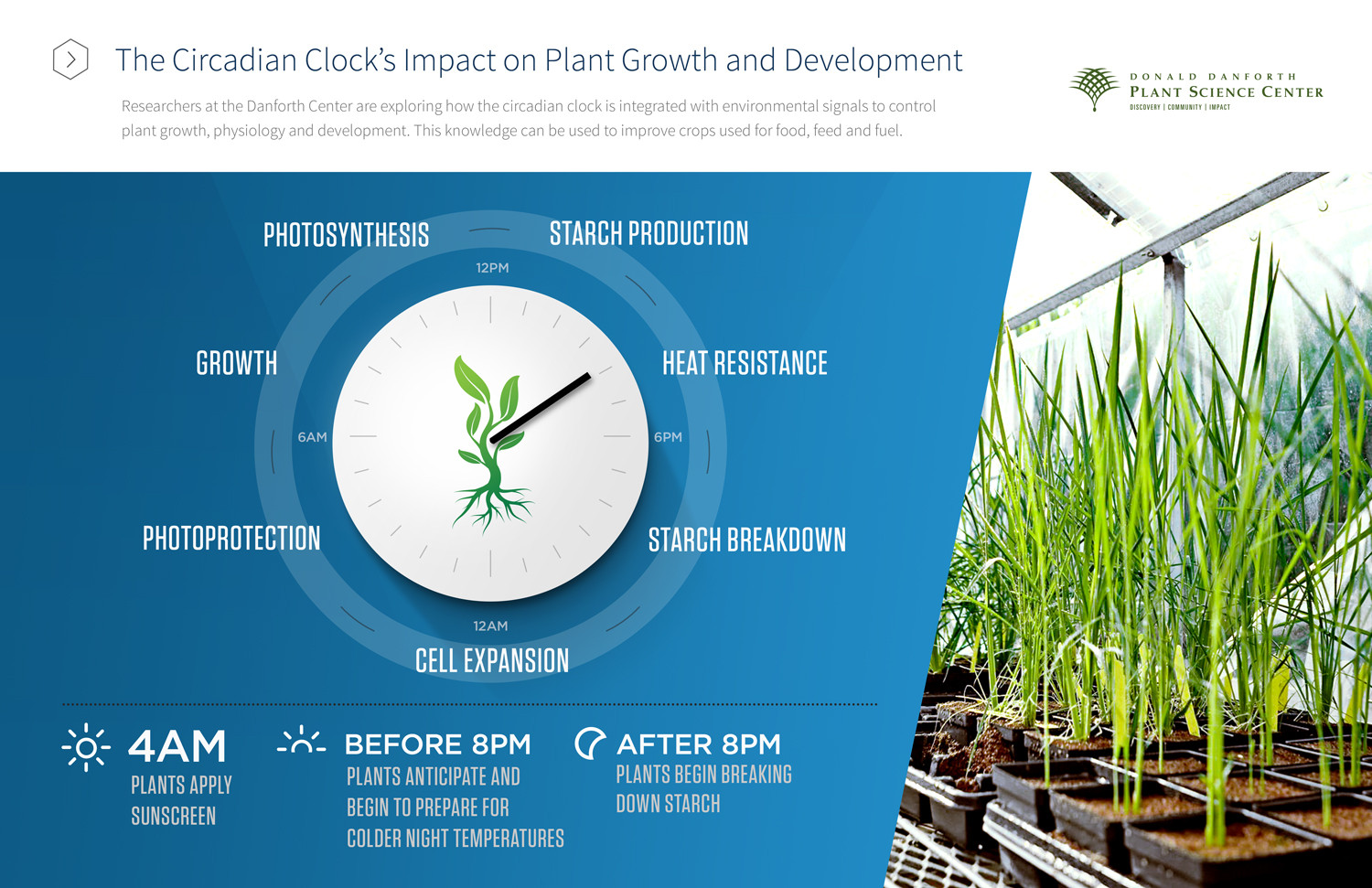 The Circadian Clock's Impact on Plant Growth and Development Infographic