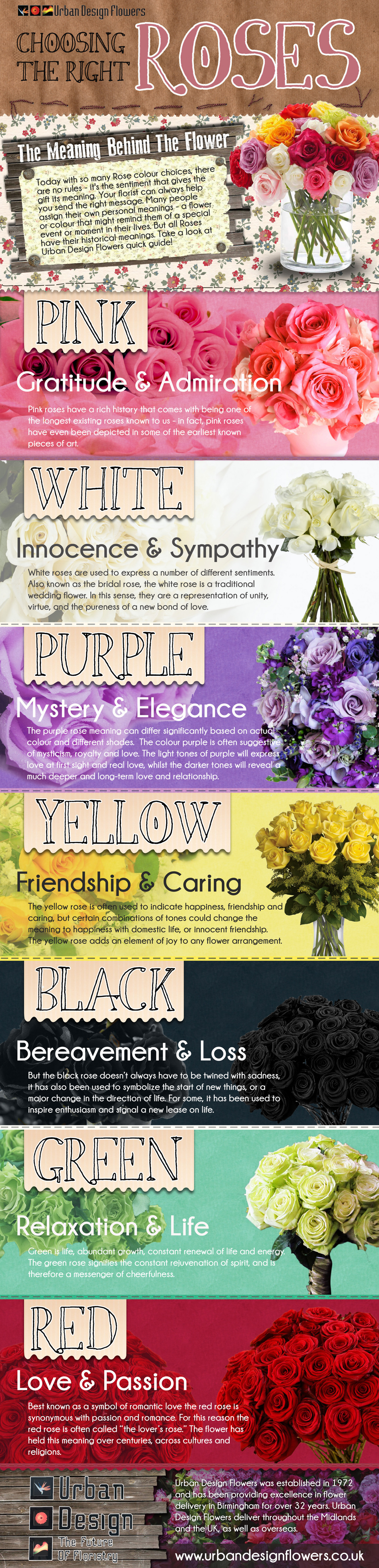 The Colors of Roses Infographic