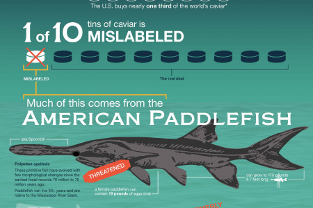 The Curious History of Paddlefish in America Infographic