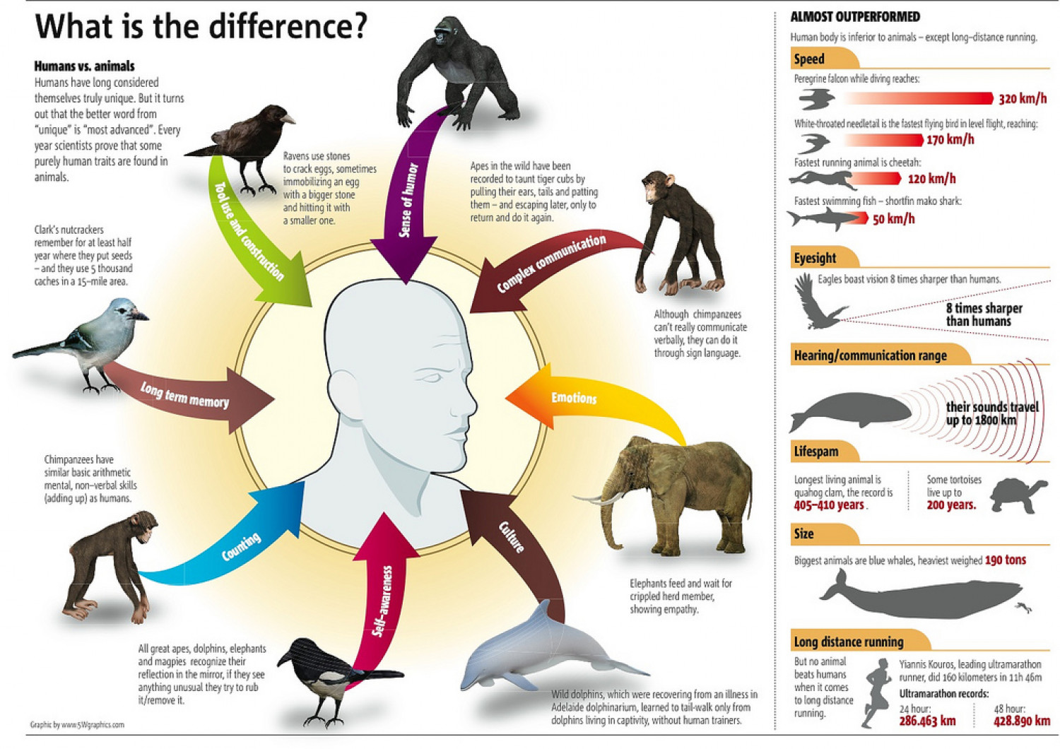 the differences between animals and humans There are distinct differences between the brain of a human and that of an animal while the size and extent of the differences can vary based on whether we are discussing a mammal, a primate, a non-vertebrate, or a crustacean, to name a few, we are just looking at the tip of the iceberg when we think about what separates us from other animals.