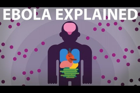 The Ebola Virus Explained — How Your Body Fights For Survival Infographic