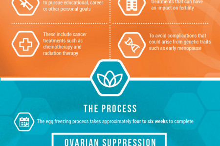 The Egg Freezing Process Infographic