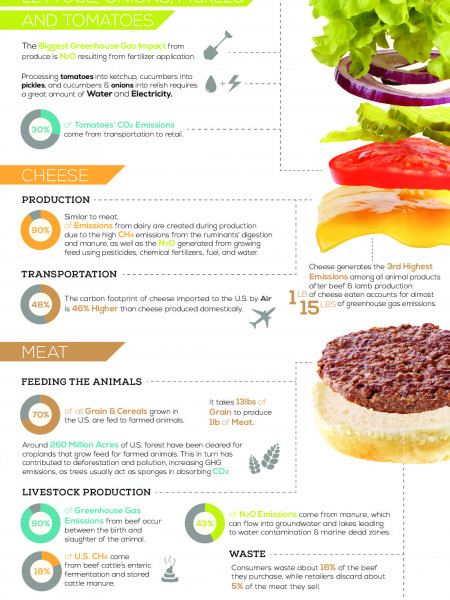 The Environmental Impact Of Your Hamburger Infographic