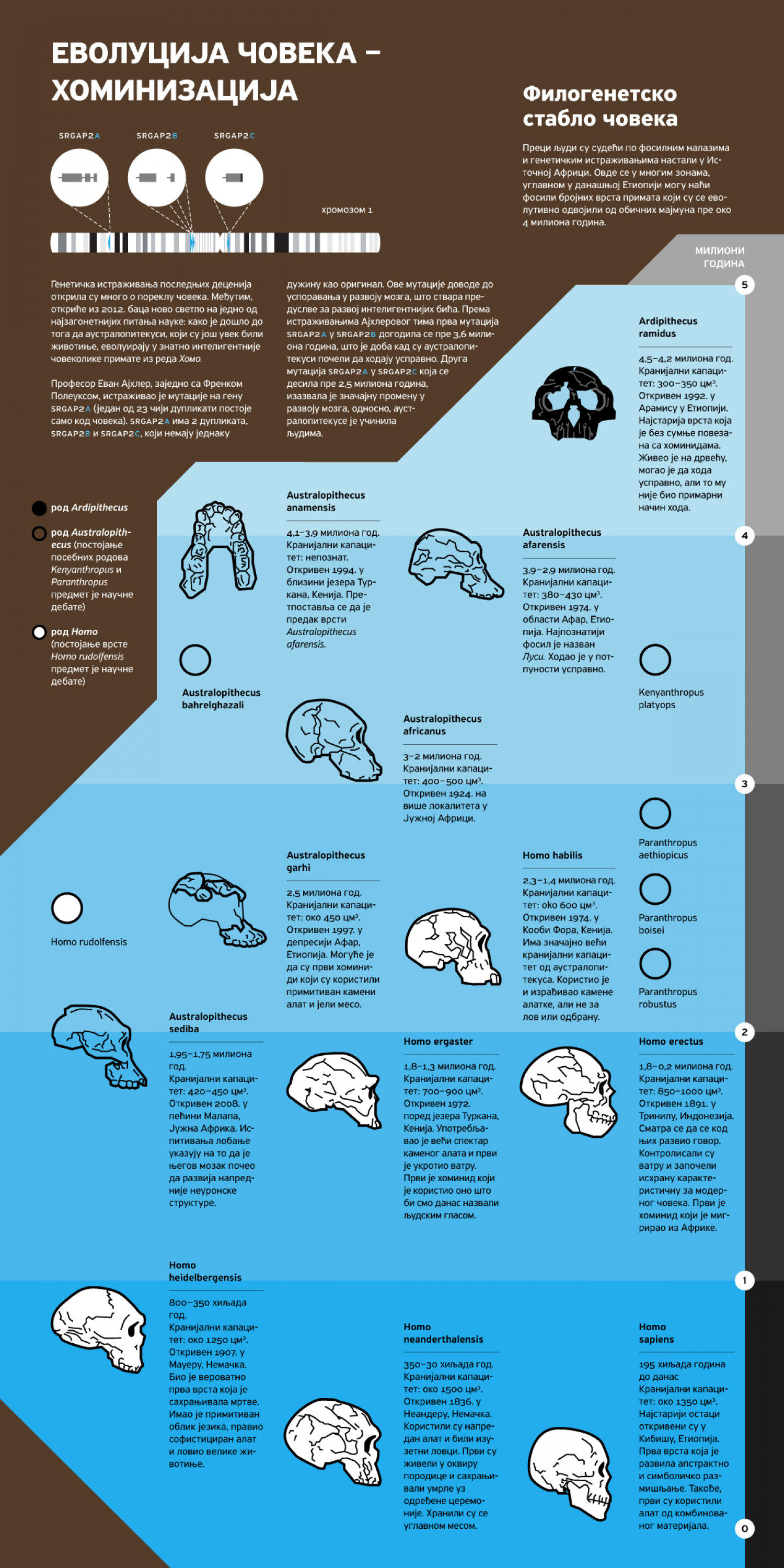 The Evolution of Man Infographic
