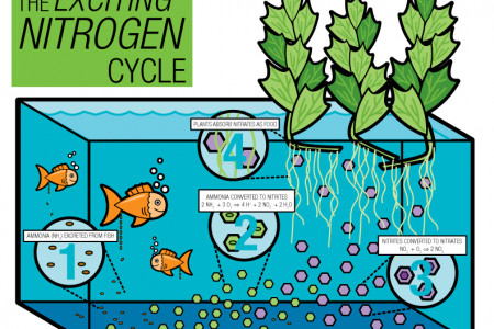 The Exciting Nitrogen Cycle Infographic