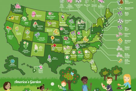 The Fifty State Flowers: A Guide to America's Garden Infographic