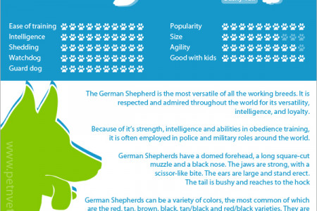 The German Shepherd Infographic