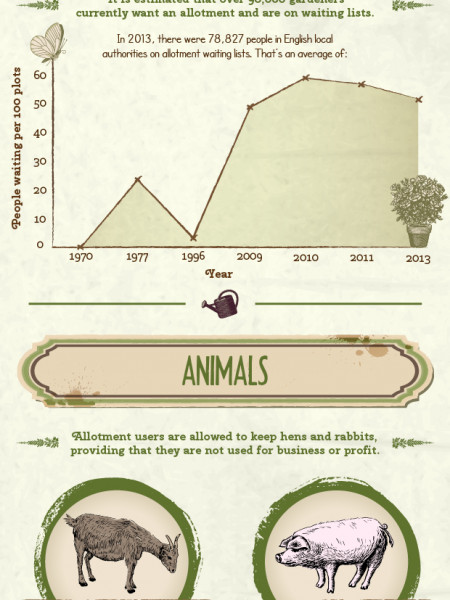 The Growth of Allotments Infographic