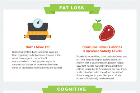 The Health Benefits of a High Protein Diet  Infographic