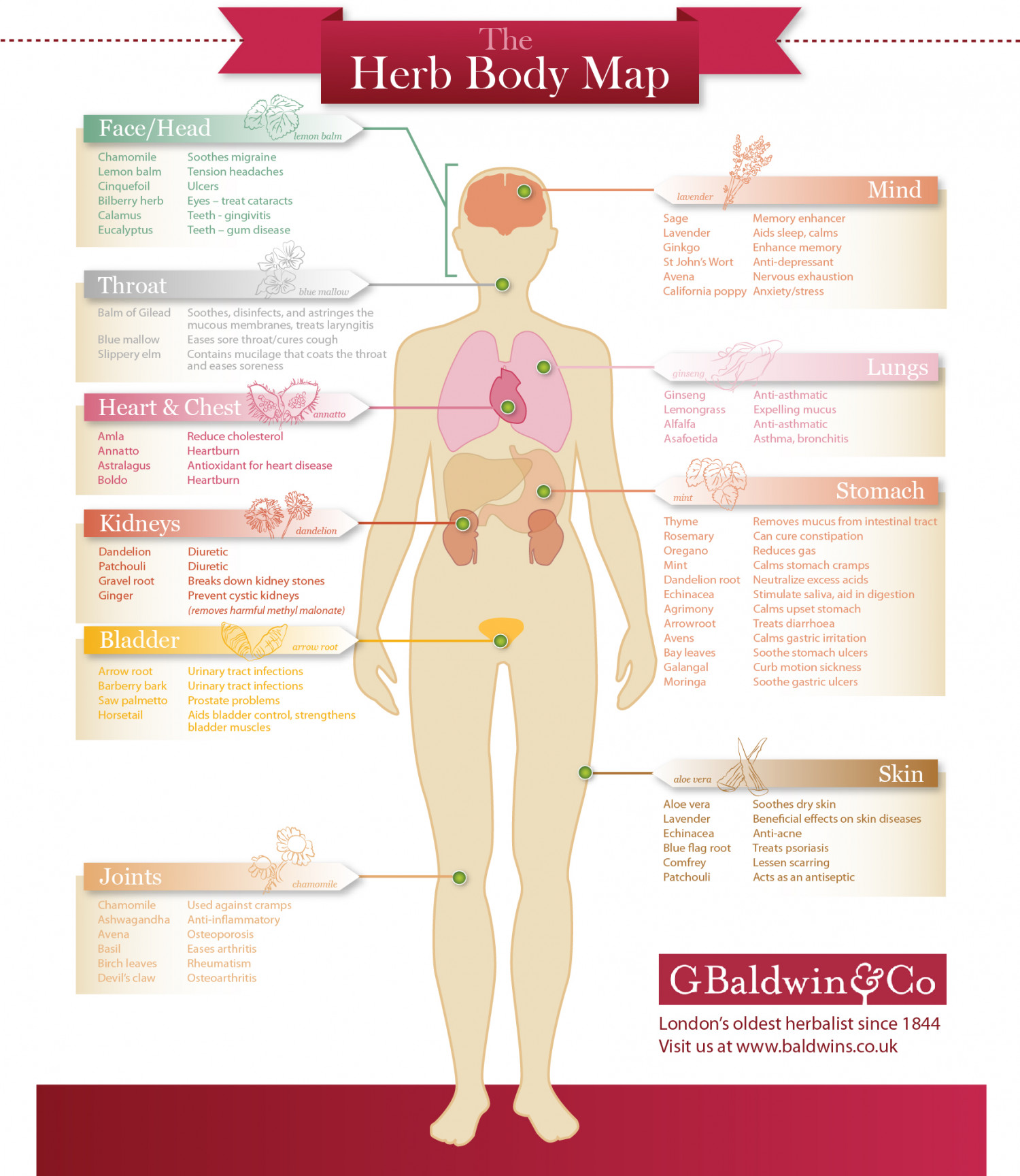 The Herb Body Map Infographic