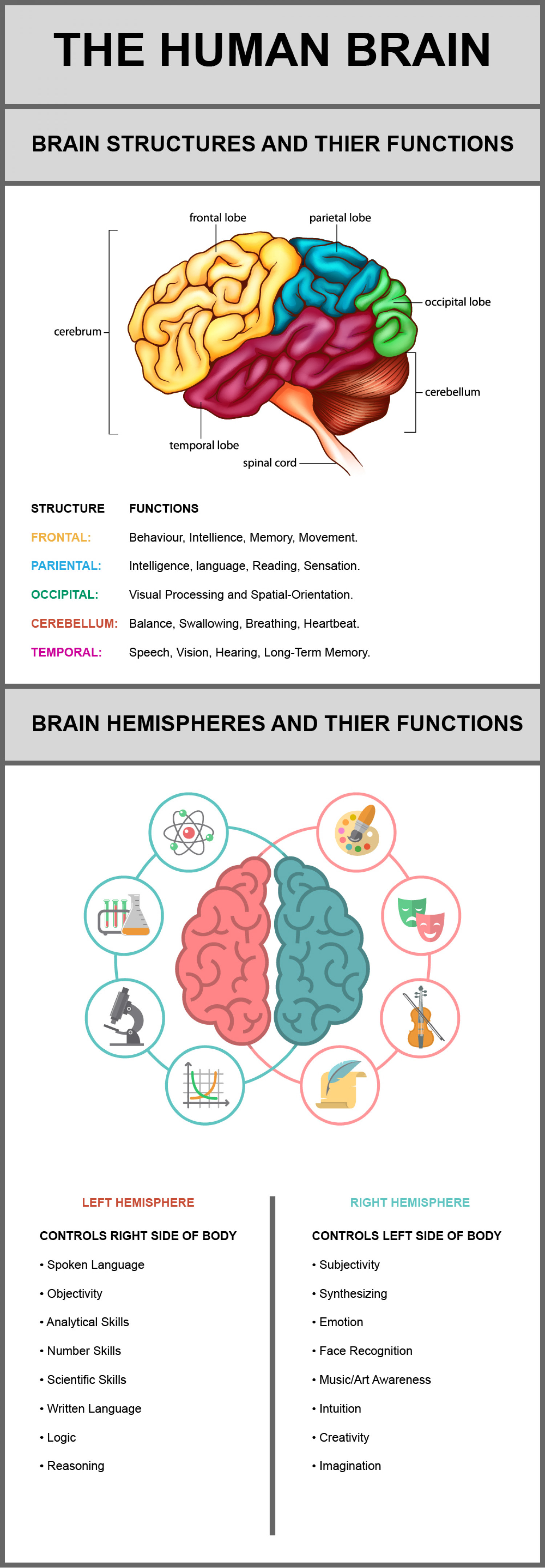 the function of the human brain To many, the cortex represents the seat of human intelligence: not only does it process information from our various senses, it also drives higher cognitive functions, such as planning, strategy and self-control.