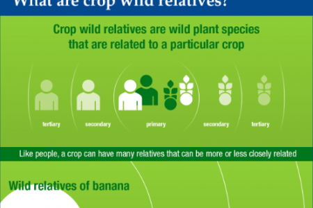 The Importance of Crop Wild Relatives Infographic