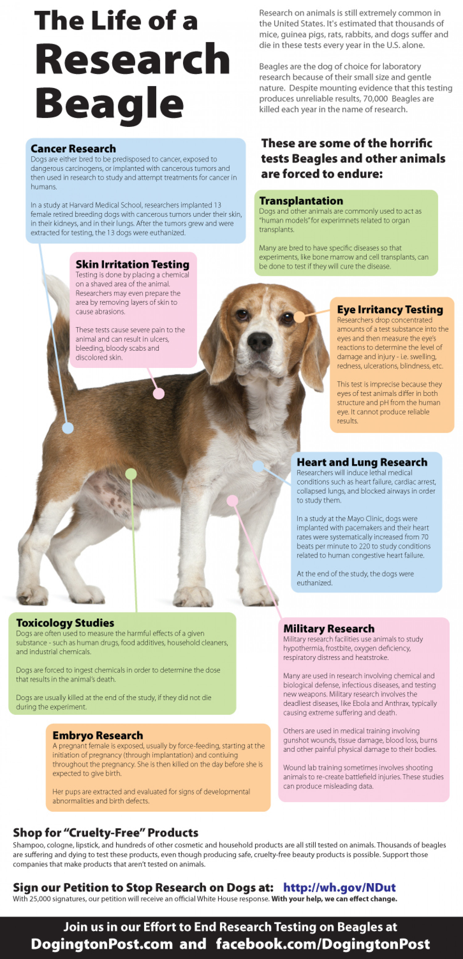 The Life of a Research Beagle Infographic