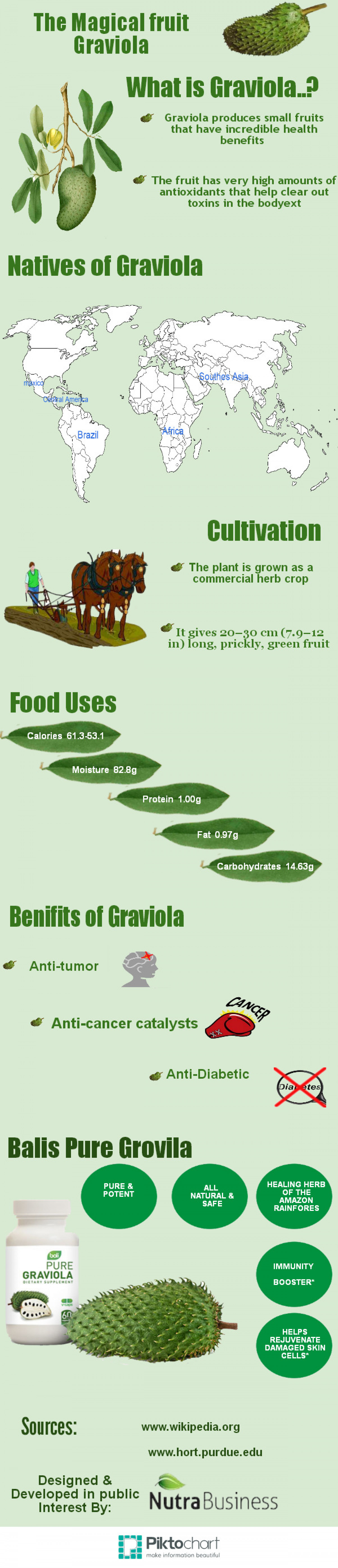The Magical Fruit Graviola Infographic