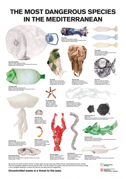 The Most Dangerous Species in the Mediterranean