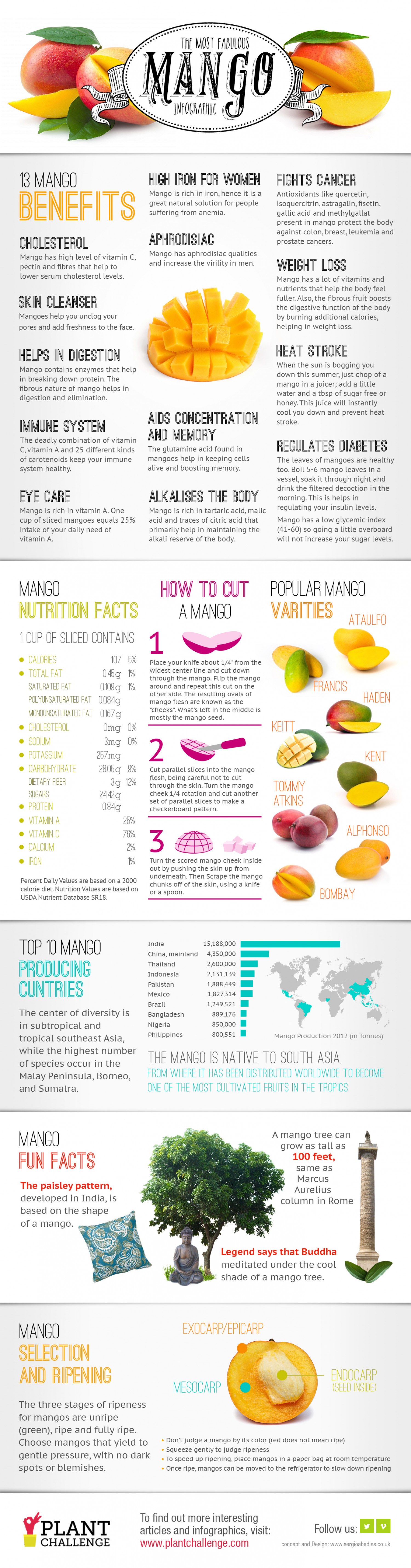 The Most Fabulous Mango Infographic Infographic